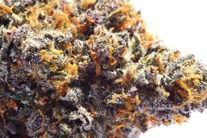 Buy Larry Bird kush Online