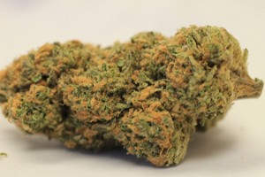 Northern Light Strain for sale Online